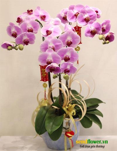 hoa la hồ điệp