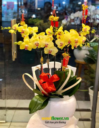 hoa lan hồ điệp senflower